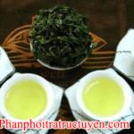 Bán trà bắc thái nguyên sỉ lẻ tại Cần Thơ