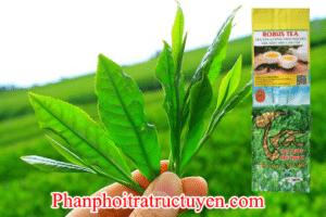 Mua Tra Thai Nguyen Ngon Re